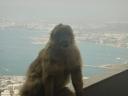 En av de eldste apene